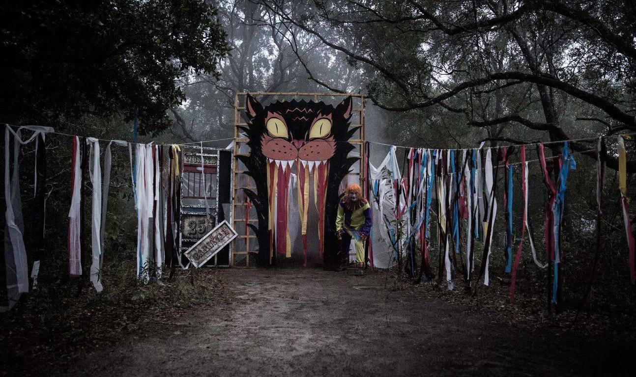 Tallahassee Halloween Events 2020 Tallahassee Museum Announces Cancellation of All Fall 2020 Events